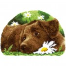 knüpfdecke bruine labrador in het gras